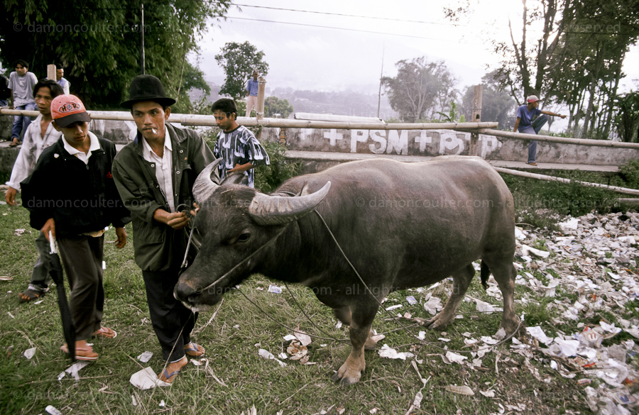 Minang Kabau Bullfighting
